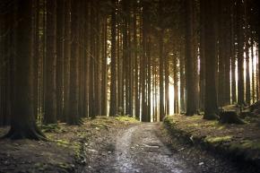 Natal: Sebuah PerjalananPulang