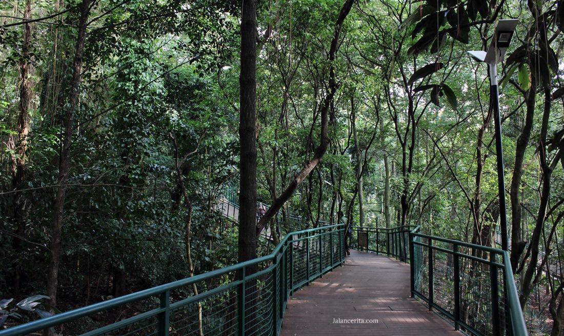 Forest Walk Babakan Silliwangi