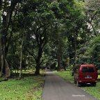 Lagi-lagi ke Kebun Raya Bogor