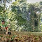 Kebun Tua di Selatan Batavia